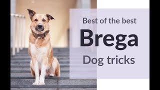 Best of the Best Brega!