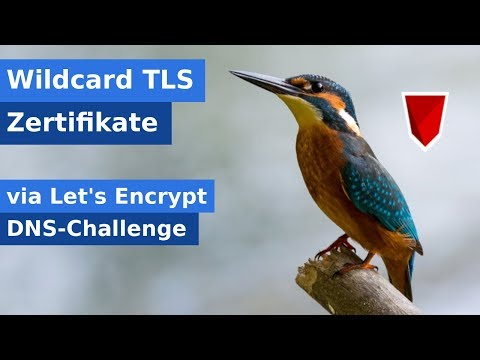 LetsEncrypt Wildcard Zertifikat erstellen (DNS-Challenge) - YouTube