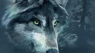 Wolfsherz   Indianer I