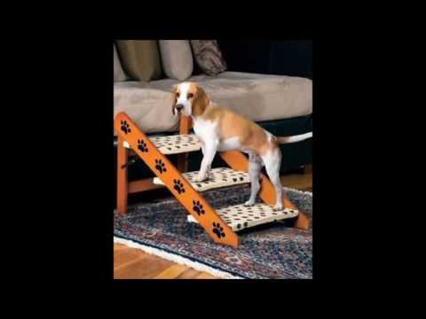 Ortopedia para mascotas