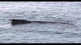 Whale watching in New England