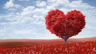 VALENTINE'S DAY: How to celebrate Valentine's Day at the Coast parts of Kenya