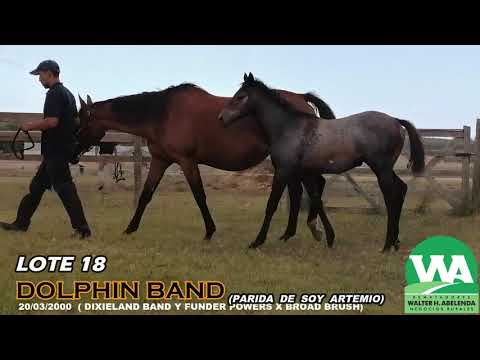 Lote DOLPHIN BAND (USA)