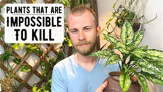 Houseplants That Are Impossible To Kill