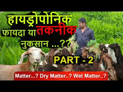 Ashwin Sawant | Dry matter..? Wet matter..? Does it really matter ..? In fodder/Hydroponic, Part - 2
