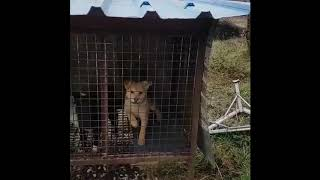 DoVE Project Rescued 80 Dogs from a Dog Meat Farm with the Help of Korean Activists