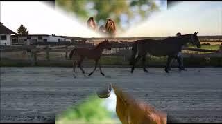 video of Dancing Sunlight
