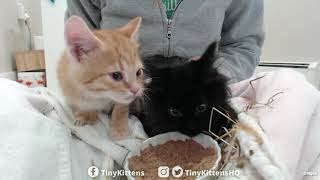 Intake with super floofy feral kitten - TinyKittens.com