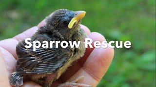 Sparrow Rescue - part one