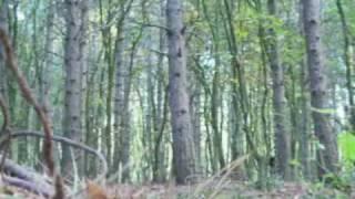 preview picture of video 'Ein Ritt durch den Stadtwald Wittenberg'