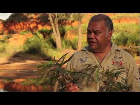 Video Plants uses and medicines near Woorabinda with Steve Kemp