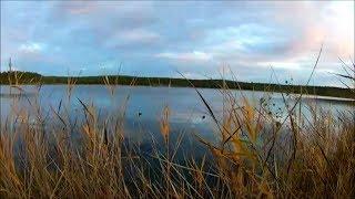 Двухдневный поход на лесное озеро. День первый.