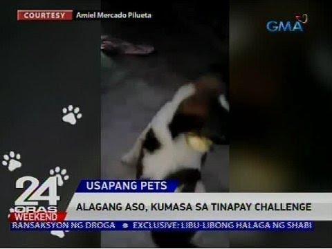 [GMA]  Usapang Pets: Mga asong nakiki-food trip