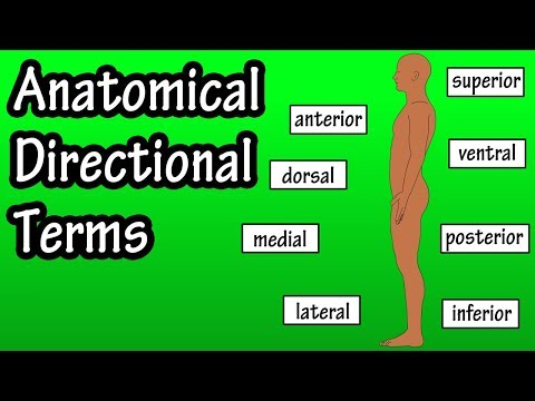 Anatomical Position And Directional Terms - Anatomical Terms - Directional Terms Anatomy Mp3