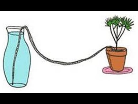This Will Water Your Plants While on Vacation Works Like A Charm