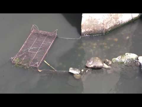 古老的捕魚方式真活用!魚獲大豐收