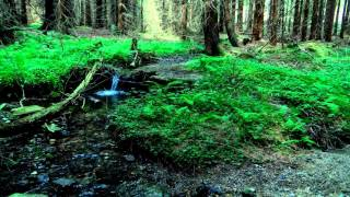Relax & Spa. Звуки природы. Живой лес. Музыка для сна. Музыка для глубокого сна. Sleep. Deep sleep.