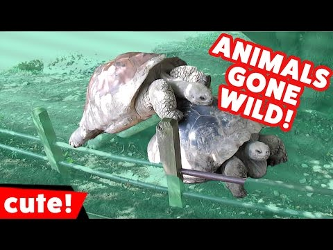 Funniest Animals Gone Wild Humping Compilation | Kyoot Animals