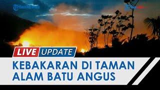 Diduga Gara-gara Puntung Rokok, Taman Wisata Alam Batu Angus Kota Bitung Terbakar hingga 8 Jam