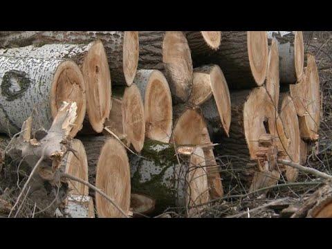 Σφοδρές αντιδράσεις για την καταστροφή δάσους του δικτύου Natura 2000…