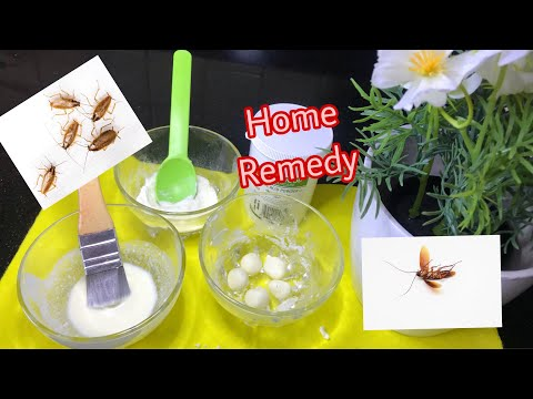 , title : 'HOW TO GET RID OF COCKROACHES | HOME REMEDY |  with Tips | USE 3 THINGS | URDU/HINDI