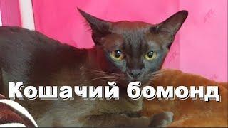 Кошачий бомонд: выбираем себе кошку
