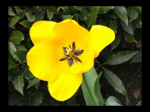 La primavera nel varesotto
