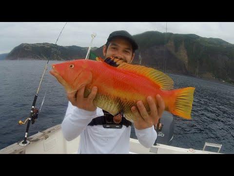 Pirkefiskeri på Azorerne