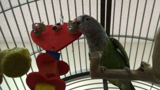 Valentine's Day Parrot Toy - Kili and Truman Love It
