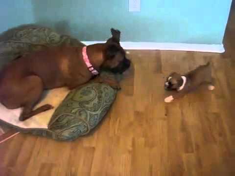 Funny sex dog xxx girl