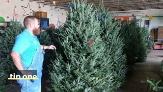 Fresh Cut Christmas Tree Care