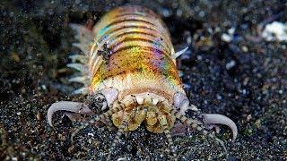 Черви съедобные garry angler worms Коричневый squir