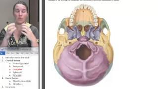 4  Occipital bone
