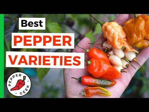 , title : 'Best Peppers of 2020 - Our Favorite Varieties - Pepper Geek