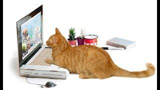 САМЫЕ ГЛУПЫЕ, БЕЗУМНЫЕ И СТРАННЫЕ ИЗОБРЕТЕНИЯ ДЛЯ КОШЕК   INVENTIONS FOR CATS