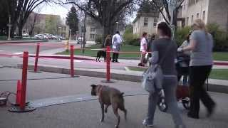 Fast and Furriest 5K