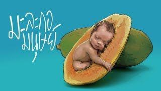 มะละกอมนุษย์
