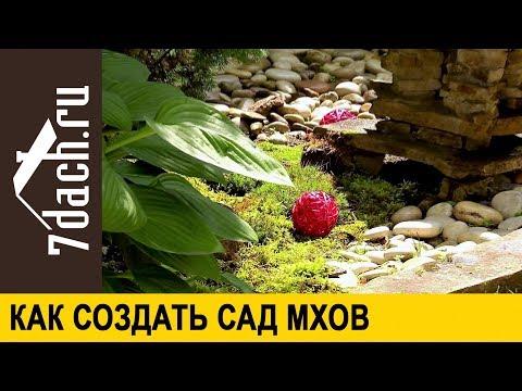 Мох в саду: зачем он нужен и как сделать сад мхов - 7 дач