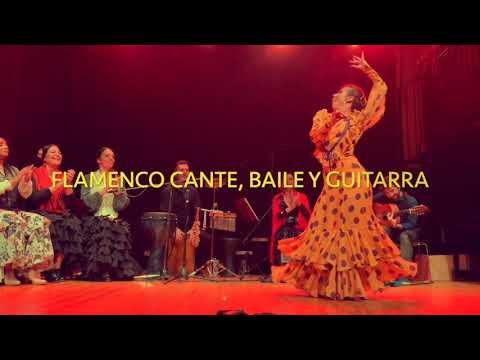 flamenco Flamenco solista, o in gruppo Voghera Musiqua