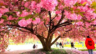 Paris Spring Walk, Botanical Gardens - Jardin Des Plantes 2019