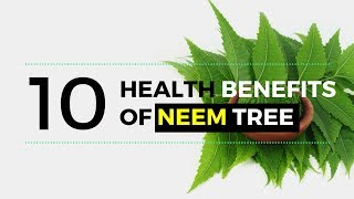 Neem Tree - Health Benefits of Neem Tree and Leaves for Skin | Skin Diseases | Home Remedies