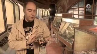 El libro rojo, Especies amenazadas - Desierto Chihuahuense, el perrito y la tortuga