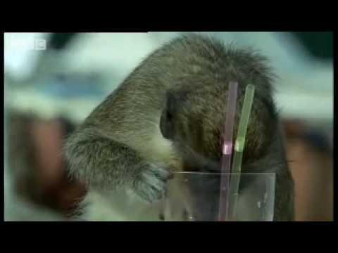 Monkey See - Monkey Drink!