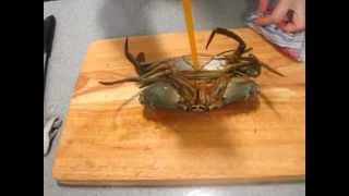 劏蟹-Video