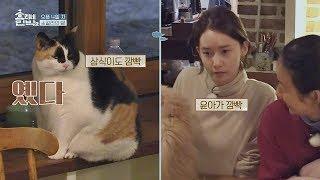 '고양이 인사' 나누는 윤아&돼냥이 삼식 (깜빡♡) 효리네 민박2 6회