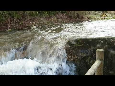 Padrones de Bureba. Cascada de La Huevera