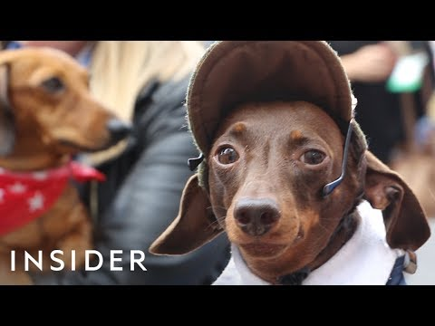London's Sausage Walk Attracts Hundreds of Dachshunds