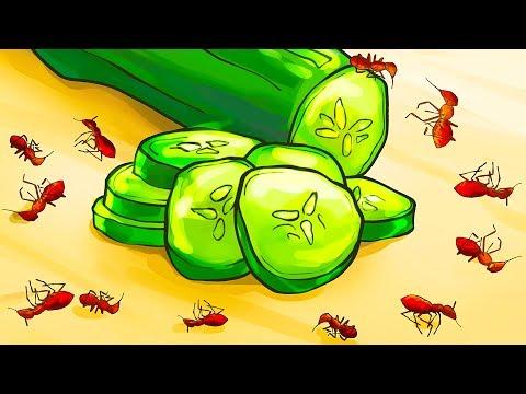 Cómo Deshacerse De Las Hormigas En Casa