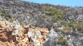 preview picture of video 'elicottero spegne gli ultimi focolai dell'incendio di Vecchiano'