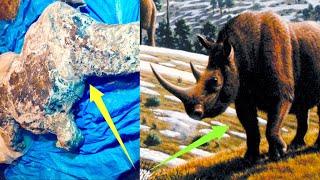 ZNZ Szczątki nosorożca z epoki lodowcowej zostały odkryte na Syberii